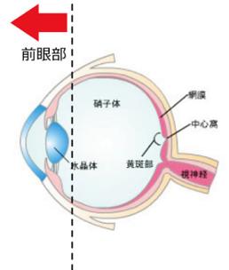 前眼部説明図